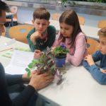 Die Schüler/innen lernen die Pflanzen näher kennen.