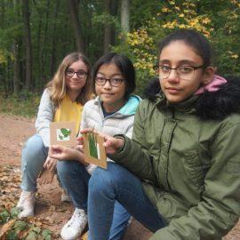 Waldtag der 2d