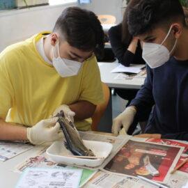 7AB WPF Biologie: Fischsektion